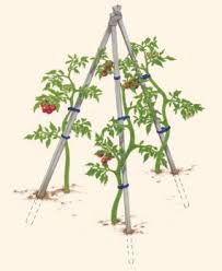 10 different and great garden project anyone can make 6 tomato