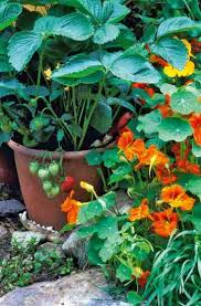 Common Plant Diseases - a guide to common garden pests and plant diseases eat healthy
