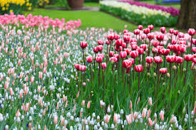 Pictures Of Garden Flowers by Blooming Flower Garden Free Stock Photo Public Domain Pictures