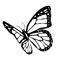 sheets monarch butterfly coloring pages 14 for your coloring for