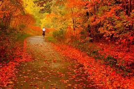 nature whack autumn leaves slow change colors fall