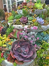Rock Garden Succulents Peaceful Design Ideas Succulent Garden 1250 Best Endless Images On