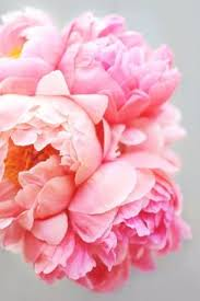 Peony Flowers by One Of My Favorite Flowers U2026 Jessica Holden Photography Peony