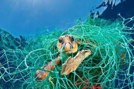 marine life leila lina