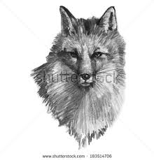 fox sketch stock images royalty free images u0026 vectors shutterstock