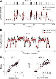 the role of presynaptic dynamics in processing of natural spike