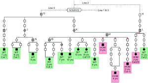 2 female boxer dogs together a pedigree based genetic appraisal of boxer arvc and the role of