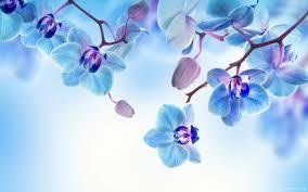 blue orchid flower blue white orchid flowers wallpaper flowers wallpaper better