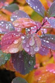 best 25 rain drops ideas on pinterest water drops water