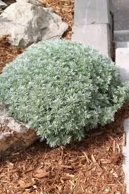 Organic Vegetable Gardening Annette Mcfarlane by 13 Best Non Flowering Plants Images On Pinterest Flowering