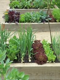 learn how to build raised vegetable beds hgtv