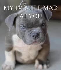 Still Mad Meme - meme maker i m still mad at you