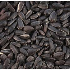 black sunflower seeds wild bird seeds duncraft black oil sunflower