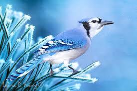 blue bird in tree bird wall bird photography