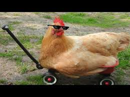 Chicken Running Meme - chicken run mlg youtube