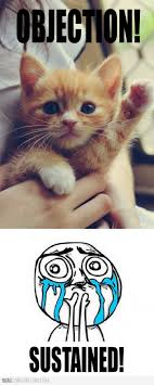 Lawyer Cat Meme - lawyer attorney legal attorney pinterest lawyer legal humor
