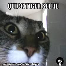 Eye Of The Tiger Meme - eye of the tiger creative industry gets busy raising awareness of