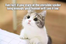 Invisible Cat Memes - fun fact i can has cheezburger