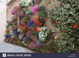 hanging baskets and covered wall floral display spoleto spello