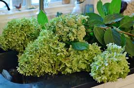 Dried Hydrangeas How To Dry Hydrangeas And Now U0027s The Perfect Time Redeem Your
