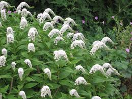 native plant and seed tough native perennials for wet sites yard and garden news