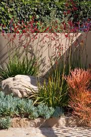 native new mexico plants a colorful xeriscape garden design by susan blake of santa fe new
