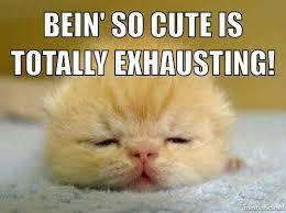 Cutest Memes - 20 cutest goodnight memes sayingimages com