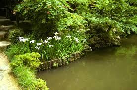 japanese gardens elements shrubs