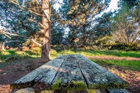 table in the wilderness mossy picnic table stock photo richlonardo 69223401