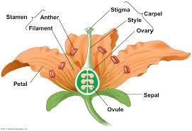 flower pmg biology