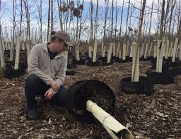 trees for omaha keep omaha beautiful emerald ash borer