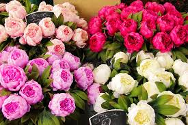 peonies for sale bouquet of peonies for sale stock photo image of market sale