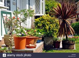 Plants In House Plants In Pots Around The Front Door Of A House Including A Spikey