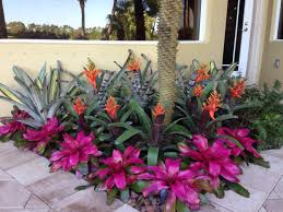 best 25 tropical landscaping ideas on pinterest tropical garden