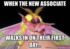 Moth Meme - when the new associate walks in on their first day rule