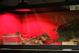 leopard gecko lighting at night leopard gecko care sheet husbandry video