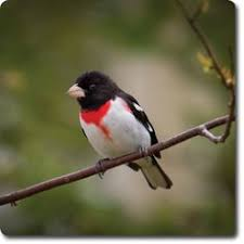 Backyard Wild Birds by Bagged Seed Or Seed Cakes U2013 Which Is Best Seed Cake Blog And