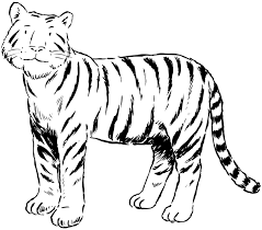 coloring pages of tigers tiger coloring pages coloring pages pinterest tigers