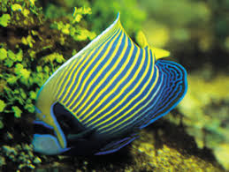 Buy Ornamental Fish Best Fish And Aquarium Supply Stores In Detroit Cbs Detroit