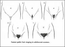male pubic hair removal photos pubic hair style dolls4sale info dolls4sale info
