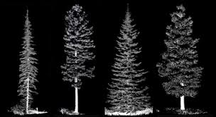 canopy fuels in 3d for nine conifer species firecenter