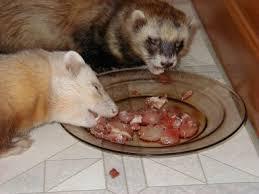 beta cells gone wild u2013 insulinomas in the ferret exotic animal