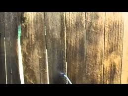 how to get rid of mold on wood