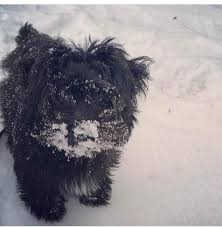 affenpinscher nc ice covered roads prompt another day of closings abc11 com
