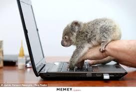 Koala Bear Meme - koala memes funny koala pictures memey com
