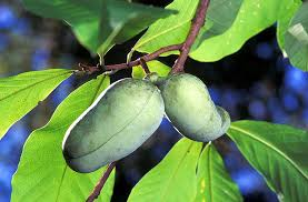 Transplant Fruit Trees - best fruit trees and nuts to grow in zone 5 through zone 9 full
