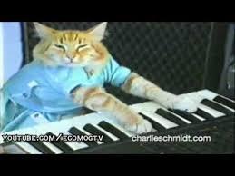Keyboard Cat Meme - cat fight ensures between meme creators and warner brothers