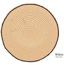 failed projects tree ring generation