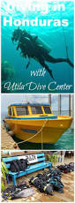 best 25 diving course ideas only on pinterest scuba diving