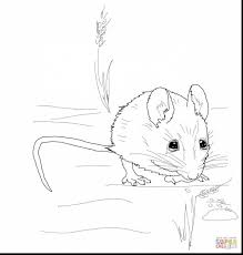 outstanding wood mice coloring pages with mouse coloring page